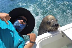 Pancho the Seal Lion
