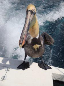 Cabo Boat Ride