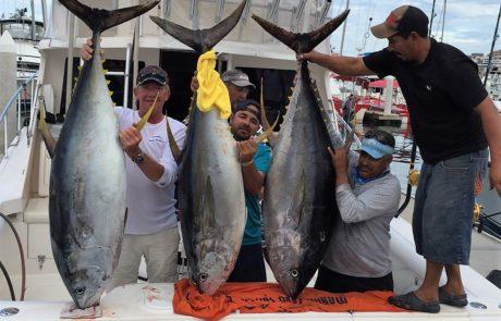 Tuna Caught Sea of Cortez