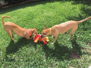 Rescue Animals Los Cabos